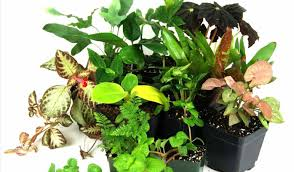 Full Size of Plant:indoor House Plants Beautiful Indoor House Plants Flowers  Ravishing House Plants ...