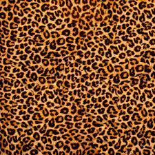 Leopard Pattern Simple Leopard Pattern Texture Design Background Leopard Backdrop