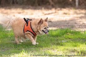 Ebay hunde tragehilfe hundetrage transporthilfe. Tragegeschirr Als Tragehilfe Gehhilfe Fur Den Hund Senior Hunde De