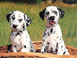 Dogs Wallpaper: Cute Dog Wallpaper ...