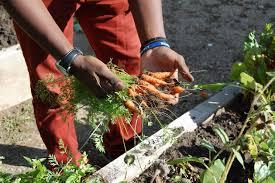 garden grants.  Grants Updates To The Community Garden Grants On Grants O