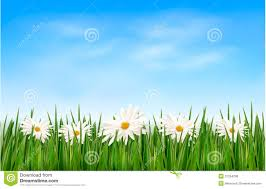 grass and flowers background. Beautiful Flowers Nature Background With Green Grass And Flowers Illustration 31254208   Megapixl For G
