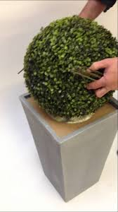 planting an artificial boxwood ball