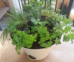 Container Gardening Vegetables And Herbs With Recycled Plastic Container Herb Garden Plans