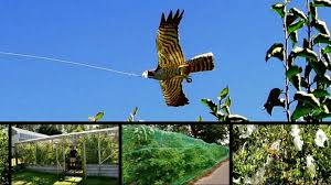 How To Keep Squirrels Away From Your House Garden Bird FeederHow To Protect Your Fruit Trees From Squirrels