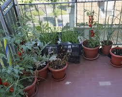 apartment herb garden. Apartment Herb Garden A