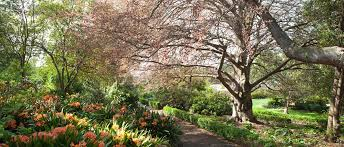 Image result for geelong botanic garden