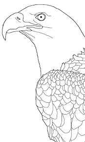 Small Picture printable 2014 bald eagle coloring picture for kids Coloring Point