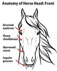 horse face drawing front. Perfect Face Draw Horse Heads And Faces Step 2 To Horse Face Drawing Front
