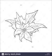 Christmas Star Flower Black And White Stock Photos Images