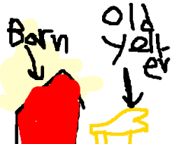old yeller by the barn with miniature s drawing by david