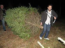 Central Jersey Christmas Tree Farms Cut Your Own Christmas Tree Christmas Tree Cutting Nj