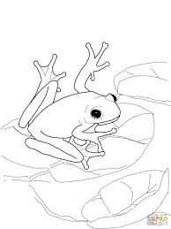 Small Picture adult frog coloring page frog coloring pages online rainforest