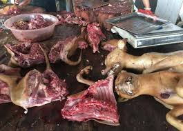 yulin dog meat festival what is it how did it start and will  yulin dog meat festival what is it how did it start and will activists ever manage to get it banned