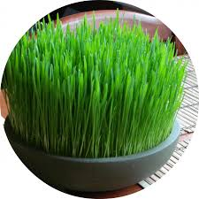 Feline 101] Cat-Safe Grass and Herb Gardens for Spoiled, Happy ...