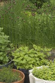best herbs to grow in pots