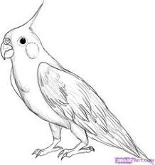 pictures of birds for drawing.  Birds How To Draw A Cockatiel Step By Step Birds Animals FREE Online On Pictures Of Birds For Drawing U