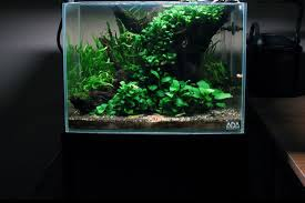 23 easy to grow low light plants for your aquarium