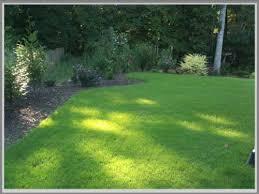 Hasil gambar untuk rumput swiss adalah