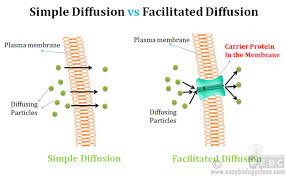 Venn Diagram Diffusion And Osmosis Difference Between Simple And Facilitated Diffusion