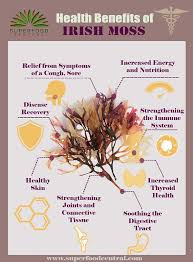 health benefits and side effects of irish moss aka sea moss
