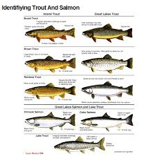 Atlantic Salmon Size Chart Use These Charts To Confidently Id Trout Salmon Species