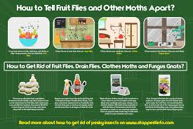 Small Flies In Bedroom How To Get Rid Of Fruit Flies Best Traps That Work