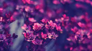 1920X1080 HD Flower Wallpapers - Top ...