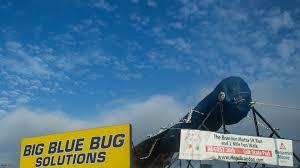 Big Blue Bug Solutions Big Blue Bug