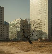 a lone tree survives after the razing of a neighborhood for future development in the middle of seoul south korea from the series trees thriving in