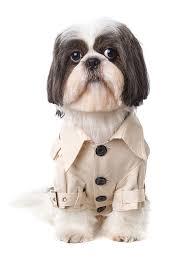 classic beige trench coat