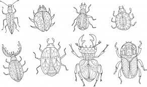 Small Picture Advanced Insect Coloring Page KidsPressMagazinecom
