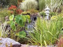 oriental garden supply photos for oriental garden supply oriental garden