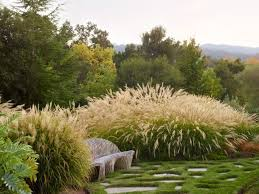 Small Picture 36 best New Zealand native garden designs images on Pinterest