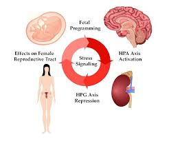 Hpa Axis Ijms Free Full Text Stress And The Hpa Axis Balancing