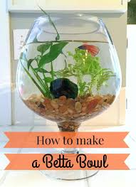 Decorative Betta Fish Bowls The Perfect Gift for an Animal Lover A Betta Fish Bowl 45