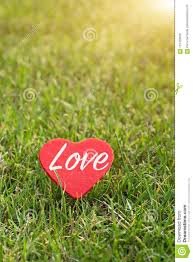 Word Backgrounds Red Heart With Love Word On The Green Grass Backgrounds With Copy