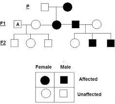 My Pedigree Chart Lesson 2 Pedigrees Punnett Squares Mr Biology