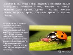 Презентация на тему Весна в мире насекомых Скачать бесплатно и  2 В
