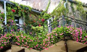 Make Your Balcony Green Garden Lively With Creepers U0026 Climbers Wall Climbing Plants India