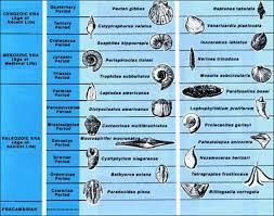 Fossil Identification Chart Google Search Montessori