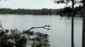Video By The Lake Hummingbird Lands On A Perch By The Lake Then Flies Away