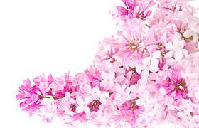 Invitation-pink-flower-wallpaper-tumblr ...