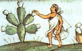 Resultado de imagen para Nopal en mexico