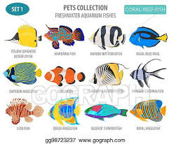 Clown Fish Identification Chart Vector Stock Freshwater Aquarium Fish Breeds Icon Set Flat
