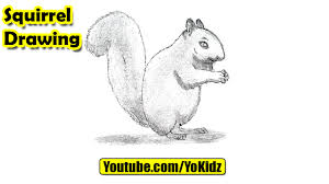 Small Picture How to draw a Squirrel YouTube