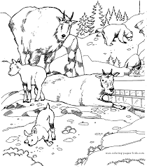 Small Picture Animal Coloring Pages For Adults Animals coloring pages and