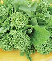 garden seed. Broccoli Raab Garden Seed