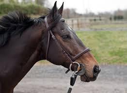 draft horse head profile. Simple Draft Horse Head Mane Portrait Profile With Draft Horse Head Profile T