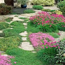 Image result for groundcovers